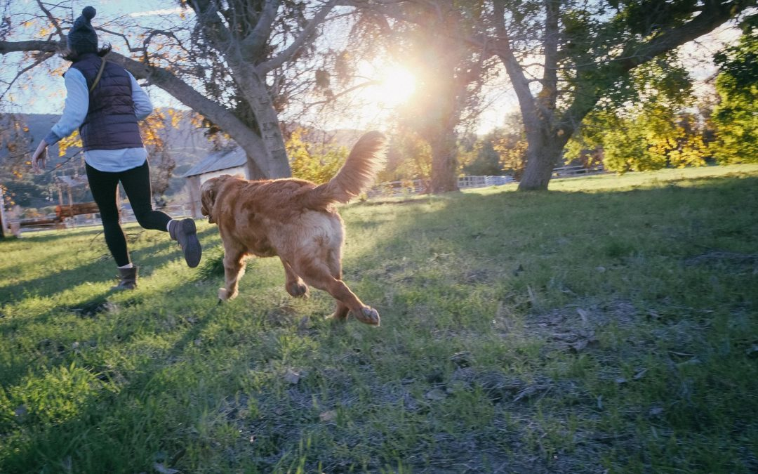 7 echte Gründe für Hunde aus Tierheimen