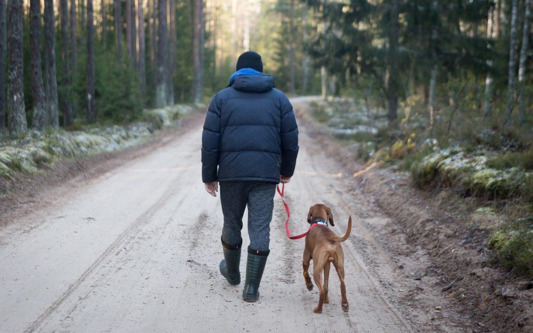 5 Tricks damit Gassi gehen dem Hund und dir Spaß macht!
